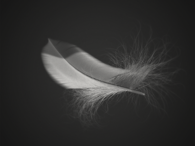 Feather Cinema 4d