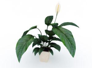 3D House Plant Free Model
