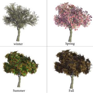 4 Seasons Magnolia Tree 3D Model
