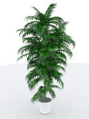 Big Fern With Flower Pot 3D Model