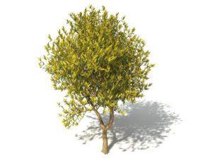 Big Garden Tree 3D Model