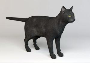 Realistic Black Cat Free 3D Model