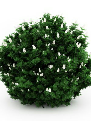 Bush with white flower 3d model