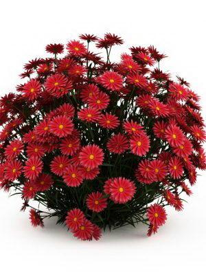 Camomile Flowers Garden Plant 3D Model