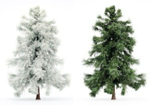 Cedar Tree Winter and Spring 3D Model