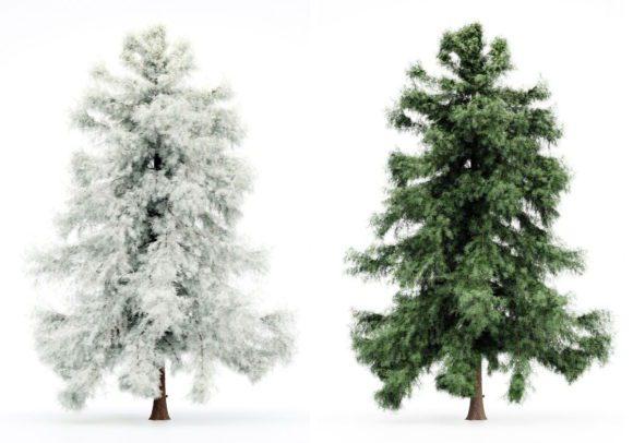 Cedar Tree Winter and Spring 3D Model