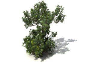 Cinema 4D Tree 3D Model