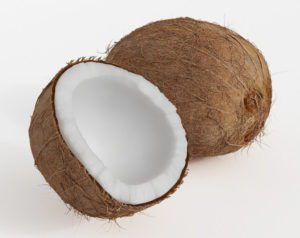 Coconut Free 3D Model
