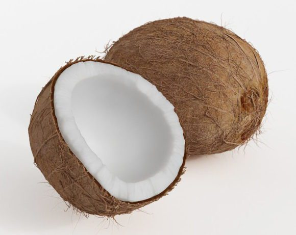 Coconut Free 3D Model