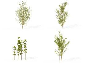 4 Common Dogwood Plants 3D Model