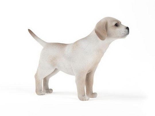 Dog 3D Model - Free C4D Models