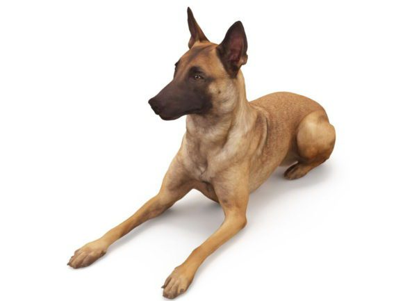 Dog Free 3D Model