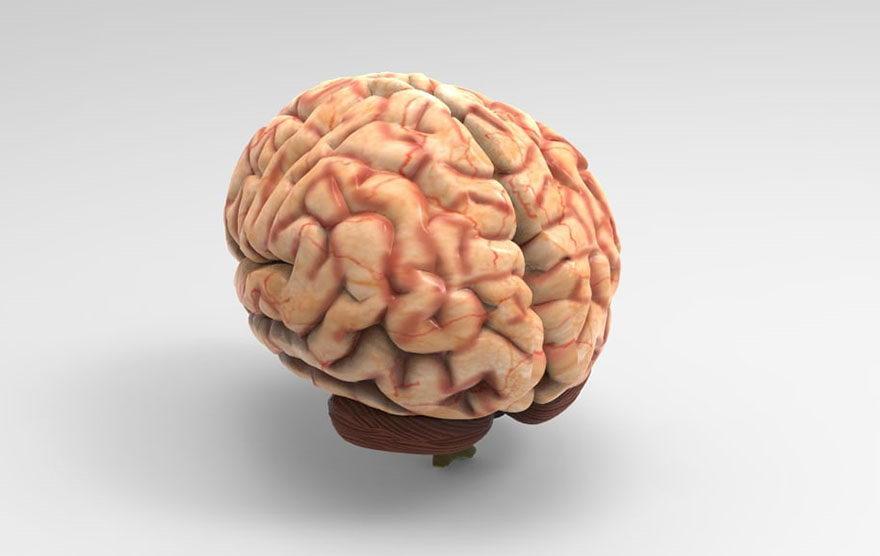 Free 3D Brain Model