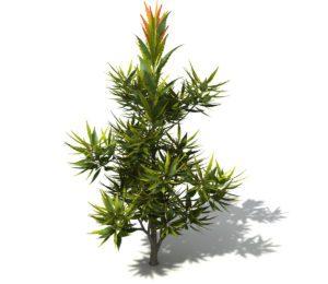Free 3D Garden Plant