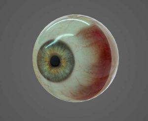 Free 3D Human Eye Model