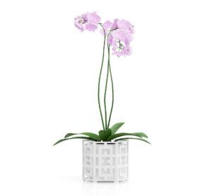 Free 3D Orchid Flower Model
