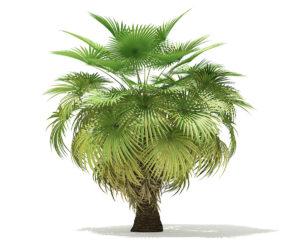 Free 3D Palm Tree Model