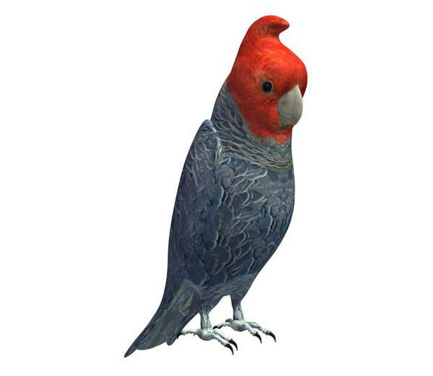 Free 3D Parrot Model