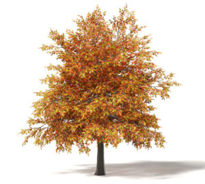 Free 3D Spring Oak Tree 3D Model