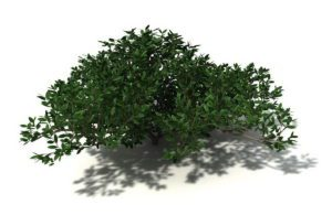 Free Cinema 4D Garden Plants