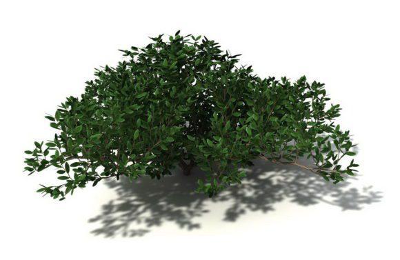 Free Cinema 4D Garden Plants