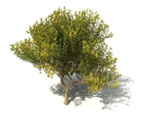 Free Cinema 4D Tree 3D Model