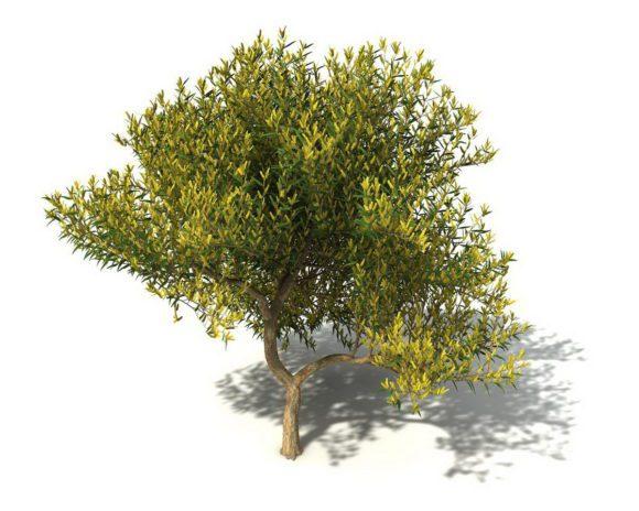 Free Cinema 4D Tree 3D Model
