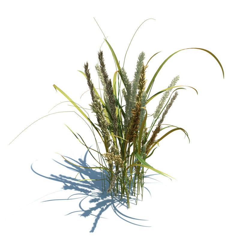 Free Garden Plant 3D Model