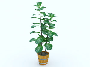 Free Plant in Wooden Pot 3D Model