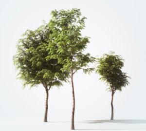 Free Tree Set 3D Model Download