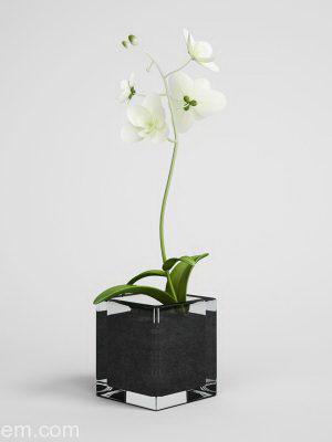 Free White Flower 3D Model