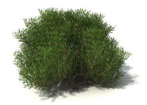 Garden Tree 3D Model
