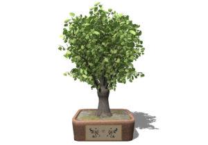 Ginkgo Biloba Tree 3D Model