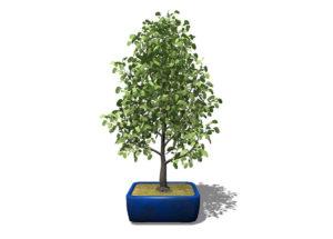 Ginkgo Biloba Tree With Pot 3D Model