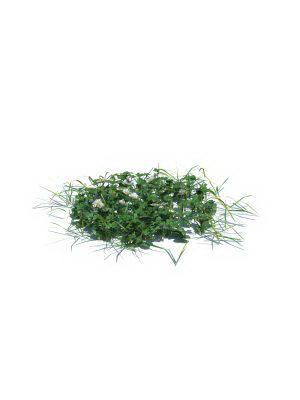 Grass Garden Plant 3D Model