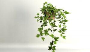 High Quality Ivy Free 3D Model