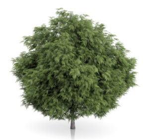 High quality Free Tree 3D Model