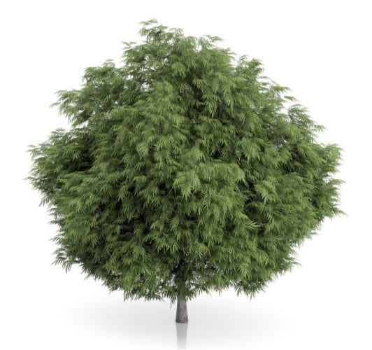 free tree 3d model - C4D Download
