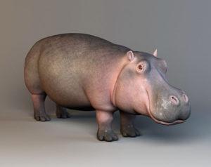 Hippopotamus Free 3D Model