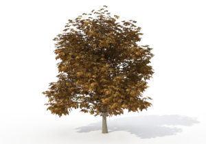 Horse Chestnut Tree 3D Model