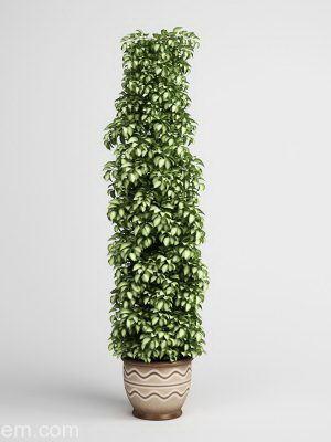 Ivy Flower With Flower Pot 3D Model