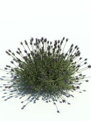 Lavender with Grass 3D Model