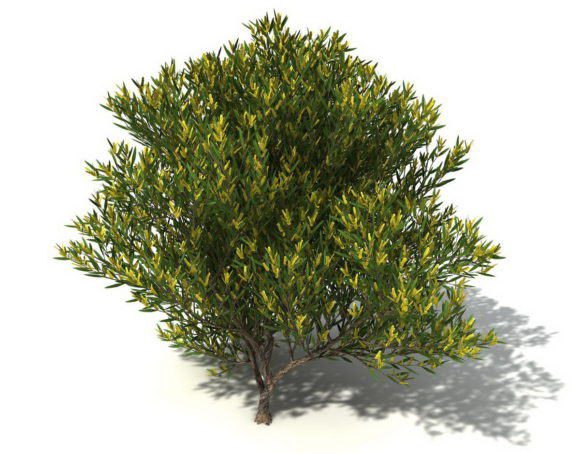 Medium Yellow Leaf Tree 3D Model