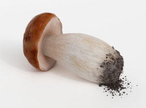 Mushroom Free 3D Model