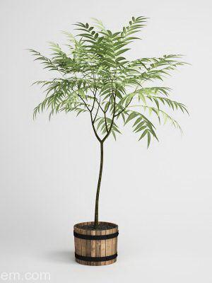 Palm Tree Houseplant 3D Model