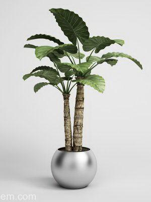Palm Tree in Chrome Flower Pot 3D Model