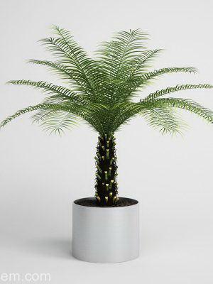Palm Tree in Metal Flower Pot 3D Model