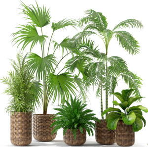 Plants in Flower Pot 3D Collection
