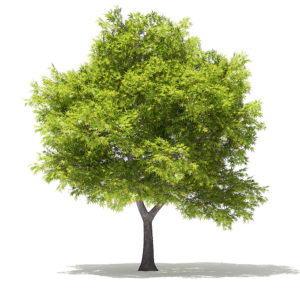 Realistic Tree Free 3D Model
