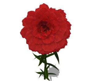 Red Carnation Flower 3D Model